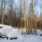 unterkuenfte_pfaelzerwald_winter